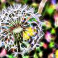 Dandelion by Michele Caporaso