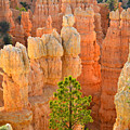 Fairyland Canyon by Ray Mathis