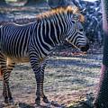 Hellabrunn Zoo - Munich, Germany by Paul James Bannerman