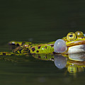 Green Frog by Arterra Picture Library