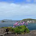 Blasket Islands by Barbara Walsh
