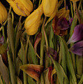 Tulips Wilting by Jim Corwin
