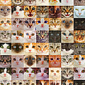 175 Random Cats by Warren Photographic