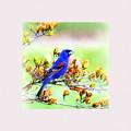 1795 - Blue Grosbeak by Travis Truelove