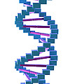 Dna Structure by Science Picture Co