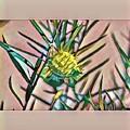 Swan Plant by Melinda Sullivan Image and Design