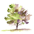 #18 Tree by Amy Kirkpatrick