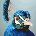 Peacock by Lesley Alexander