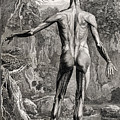 18th Century Anatomical Engraving by Science Source