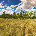 Florida Everglades by Raul Rodriguez