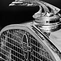 1931 Chevrolet Hood Ornament 4 by Jill Reger