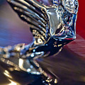 1938 Cadillac V-16 Hood Ornament by Jill Reger