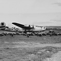 1944 B-24 H Plane In Field W/ Sheeep Pantanella Airfield Italy by MountainSky S