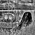 1961 Chevrolet Apache 10 Black And White 4 by Lisa Wooten