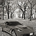 1974 Chevrolet Corvette In A Park In Black And White 3466.01 by M K Miller