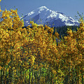 1m1733 Mt. Drum In Autumn by Ed Cooper Photography