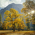 1m6611-oak Trees And Middle Cathedral Rock In Autumn by Ed  Cooper Photography