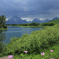 1m9236 Mt. Moran And Sticky Geranium by Ed Cooper Photography