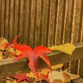 A Foliage Pillow On A Bench In A Woodland by Susanna Mattioda