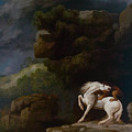 A Lion Attacking A Horse by Celestial Images