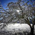 A Winter's Tale by Edmund Nagele