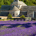 Abbaye De Senanque by Brian Jannsen