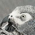 African Grey Parrot by Pio De Lima