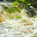 Aira Force by Paul Cullen