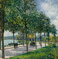 Allee Of Chestnut Trees by Alfred Sisley