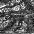 Angel Oak Tree Charleston Sc by Dustin K Ryan