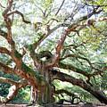 Angel Oak Tree by Kim Elliott