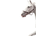 Arabian Horse by Fadel  Ayoub