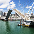 Auckland Marina In New Zealand by Didier Marti