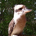 Australia - Kookaburra Full Body Look by Jeffrey Shaw