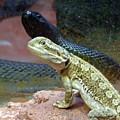 Australia - The Taipan Snake by Jeffrey Shaw