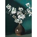 Australian Almond Blossom by MotionAge Designs
