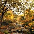 Autumn Garden by Jessica Jenney