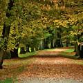 Autumn Park by Dawn Van Doorn