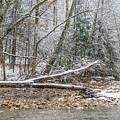 Autumn Snow Williams River  by Thomas R Fletcher