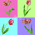 Background With Tulips by Natalia Piacheva