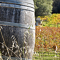 Barrel In The Vineyard by Brandon Bourdages
