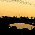 Bat Flight In Austin Texas by Anthony Totah