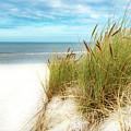 Beach Grass by Hannes Cmarits