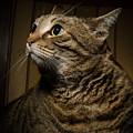 Big Cat On Chair by Nikita Buida