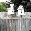 2 Bird Houses And A Fence by Walter Oliver Neal