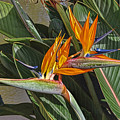 Bird Of Paradise by Leon Roland