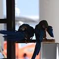 2 Birds by Rob Hans