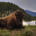 Bison by Patrick  Flynn
