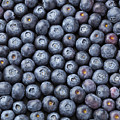 Blueberries by Julie Woodhouse