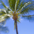 Blurry Palms by Ron Dahlquist - Printscapes